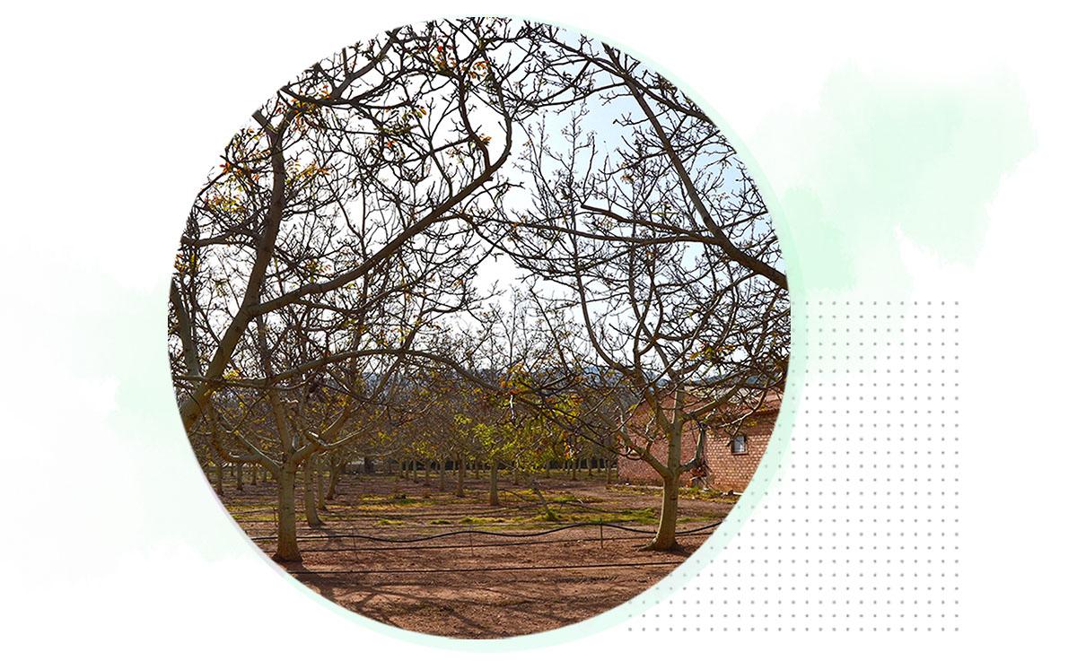 ecolumber-agro-fincas-01
